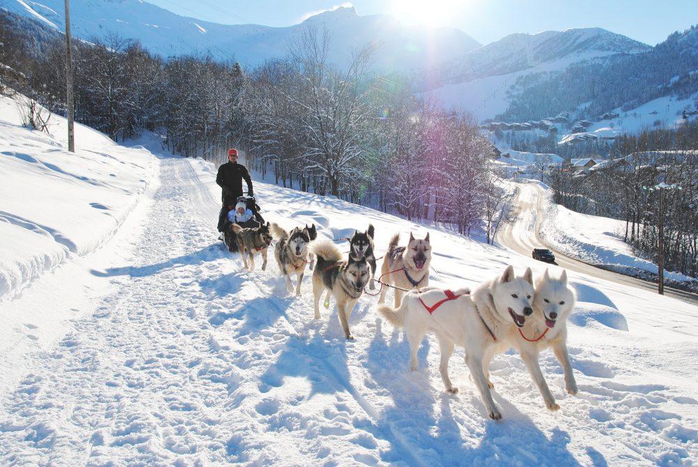 Chiens de traîneau à Valmorel l'hiver, station de Savoie Mont-Blanc